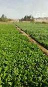 مزرعة للبيع في حي العكيشية في مكه