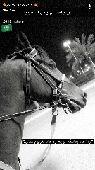 مطلوووب حصان شعبي السعر مايتعدى4000والعمر ماي