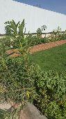 تنسيق حدائق وعمل شلالات وتركيب العشب الصناعي