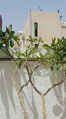 شجرة تزهر زهور بيضاء براحة جميلة