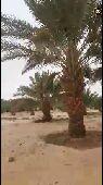 مزرعة للبيع في محافظة الشملي