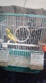 القصيم - الطيور الحب   90