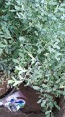 أبومراد   للزراعة والديكورات الحجرية
