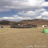 مخيم للإيجار طريق تبوك الجديد (الروضه)