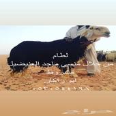الفحل لطام من حلال منسي ماجد العنيضيل مشروط