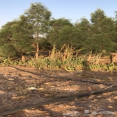 مزرعة للايجار رفحاء