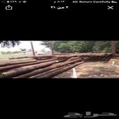 أعمدة خشب قديمه من شركة كهرباء