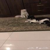 فندقة قطط ب اسعار مناااسبه