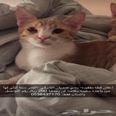 قطه مفقوده