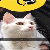 بسه بيضه تبني بالمدينة مع القفص حقها ومتعوده عاللتر بوكس