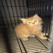قطط - قطط  العدد3 ذكرين