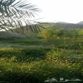 مزرعة في مكة المكرمة - حي البجيدي