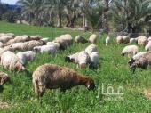 مزرعة للبيع في حي ظهرة نمار في الرياض