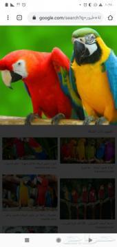 فندقة طيور بأقل سعر 9ريال فقط رعاية  للجملة