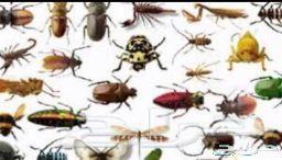 رش مبيدات بالرياض ومكافحة حشرات مع الضمان