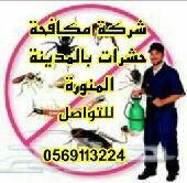شركة مكافحة ورش الحشرات والقوارض بالمدينة