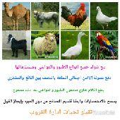 بيع وشراء طيور ومواشي واتساب