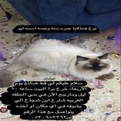 قط مفقود في طايف اخر ظهور حي الحلقه شرقيه