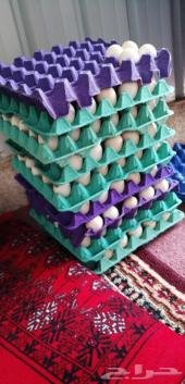 بيض مخصب تخصيب عالي