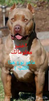 تعرف على كل انواع الكلاب و سلالاتها و تصنيفها