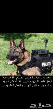 كلاب  (  جميع خطوات التدريب الكلاب )