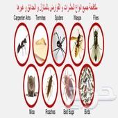 رش مبيدات صراصير مكافحة حشرات بجدة السعر