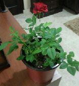 نباتات ظل داخل المنزل