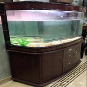 حوض سمك طول متر و50 صانتي عرض متر و20 ص