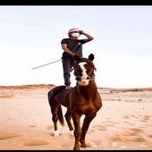 حصان شعبي شيخ