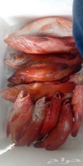 مطعم سمكة يوجد توصيل