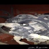 للبيع طرنبه هدرليك بوكلين دوسان 2012