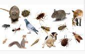 مكافحة حشرات بالرياض n0537108128
