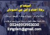 راعي سوداني للاستقدام