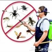 شركه مكافحة حشرات بجده