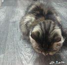 قطة مفقودة(رجعت للبيت)