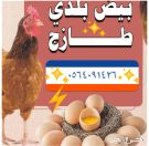 بيض دجاج بلدي