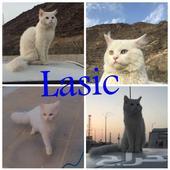 قط مفقود بحي العزيزية