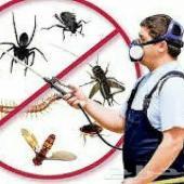 شركة مكافحة حشرات ورش مبيد ودفان