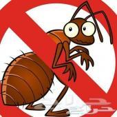 شركة مكافحة حشرات بق صراصير نمل فئران برص