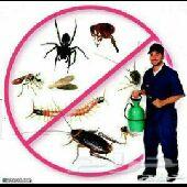 شركة رش الحشرات بالمدينة المنورةوتسليك مجاري