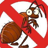 رش مبيدات امنه لمكافحة جميع الحشرات والقوارض