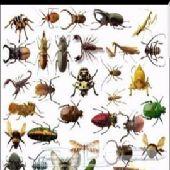 مكافحة جميع الحشرات بالضمان