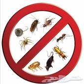 شركة رش مبيدات ومكافحة حشرات رش صراصير نمل
