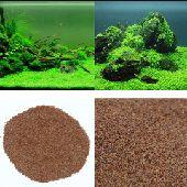 حصريا بذور نباتات مائيه لحوض السمك