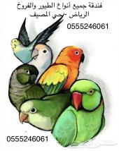 فندقة جميع انواع الطيور والفروخ
