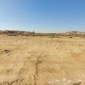 مزرعه بصك وادي بن هشبل للبيع