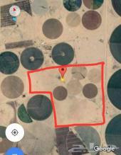 مشروع زراعي للبيع مساحه مليون و400 الف حائل