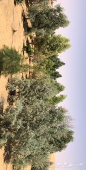 مزرعه للبيع شرق حائل ( الرخيصيه )