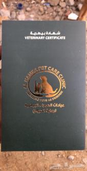 كلب اميركان بيتبول