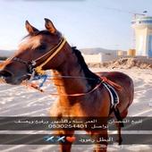حصان البيع كفو كفو